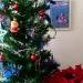 En revanche, l'Etoile de Noël est bien vivante