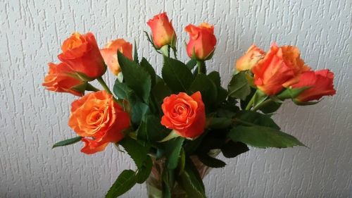 anniversaires,cefro,rowen,témoignages,blog,gouvernement,roumanie